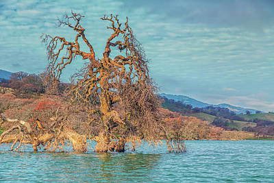 Photograph - Clouds Above Flooded Tree by Marc Crumpler