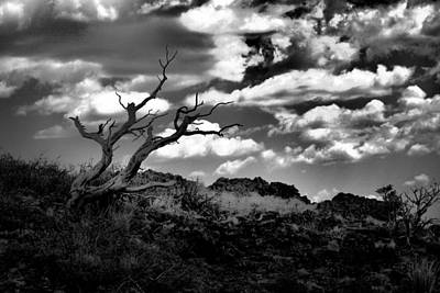 Southwestern Art Photograph - Clouds And A Tree Baw by Jeff Swan