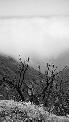 Photograph - Clouds And Catcus  by Laurie Pike