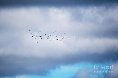 Photograph - Clouds And Ducks by Cheryl McClure