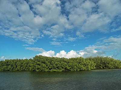 Photograph - Clouds And Mangroves In Key West by Bob Slitzan
