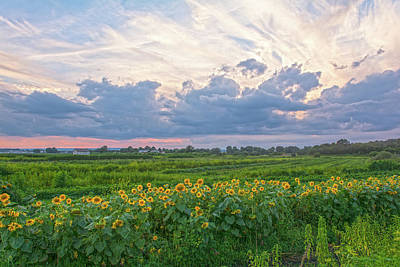 Clouds And Sunflowers Art Print
