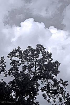 Photograph - Clouds And Trees by Todd Blanchard