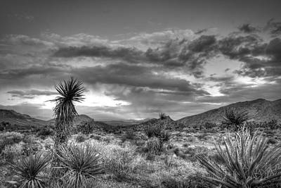 Photograph - Clouds And Yucca by Robert Melvin