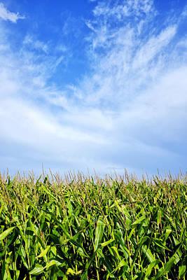 Photograph - Clouds Over A Cornfield by Fabrizio Troiani