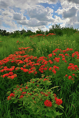 Photograph - Clouds Over Field Of Butterfly Weed In Glacial Park by Ray Mathis