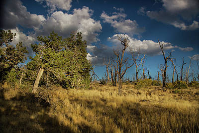 Photograph - Clouds Over Mesa Verde by Kunal Mehra