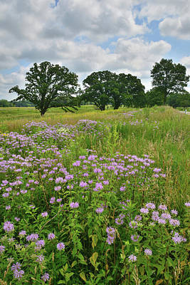 Photograph - Clouds Over Prairie Wildflowers by Ray Mathis