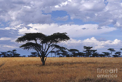 Photograph - Clouds Over The Masai Mara by Sandra Bronstein