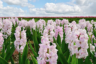 Photograph - Clouds Over The Pink Hyacinth Field by Mihaela Pater