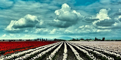 Photograph - Clouds Over The Tulip Fields by David Patterson
