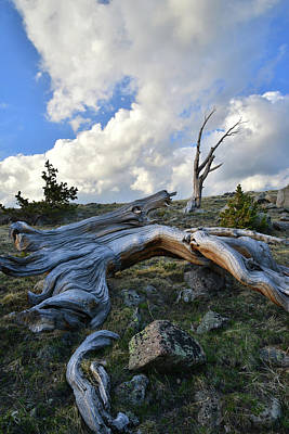 Photograph - Clouds Rising Over Mt. Evans Bristlecones by Ray Mathis