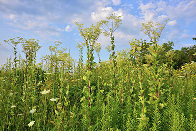Photograph - Clouds Roll In Over Marengo Ridge Indian Plantain by Ray Mathis