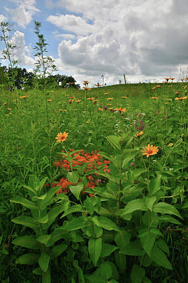 Photograph - Clouds Roll In Over Wildflowers In Glacial Park by Ray Mathis