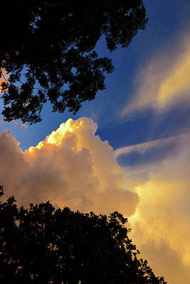 Photograph - Clouds Through Trees by David Lee Thompson