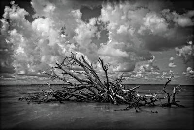 Photograph - Clouds Trees Water by Alan Raasch