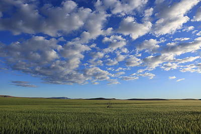 Photograph - Cloudscape by Lynn Hopwood