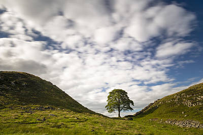 Kevin Costner Photograph - Cloudscape Sycamore by David Taylor