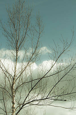Photograph - Cloudy Blue Sky Through Tree Top No 1 by Ben and Raisa Gertsberg