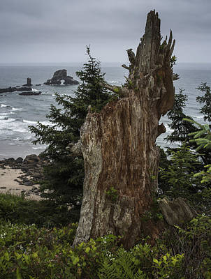 Photograph - Cloudy Day At Ecola State Park by Robert Potts