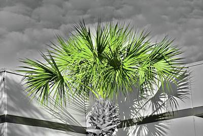 Photograph - Cloudy Day Palm by Florene Welebny