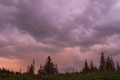 Photograph - Cloudy Forest  by James BO Insogna
