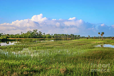 Photograph - Cloudy Sky Marsh by Tom Claud
