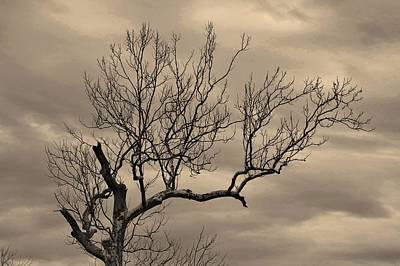 Photograph - Cloudy Sky Tree by Buddy Scott