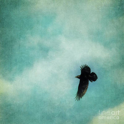 Cloudy Spring Sky With A Soaring Raven  Art Print by Priska Wettstein