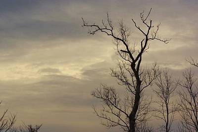 Photograph - Cloudy Tree 2 by Buddy Scott