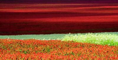 Jerry Sodorff Royalty-Free and Rights-Managed Images - Clover Abstract by Jerry Sodorff