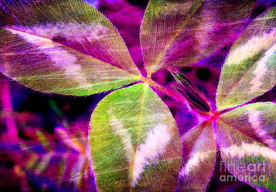 Photograph - Clover Abstract by Judi Bagwell