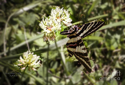 Photograph - Clover And The Butterfly by Melissa Messick