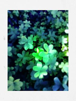 Photograph - Clover by Anne Thurston