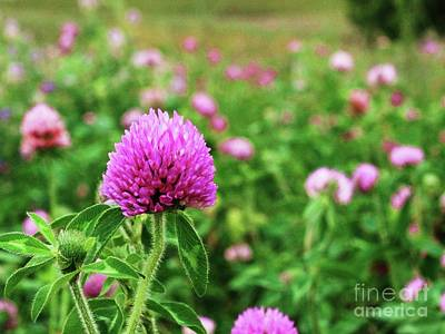 Photograph - Clover Field by J L Zarek