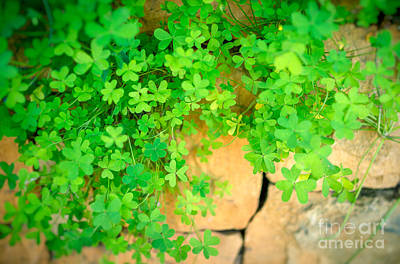 Photograph - Clover On The Stone Wall by Anna Om