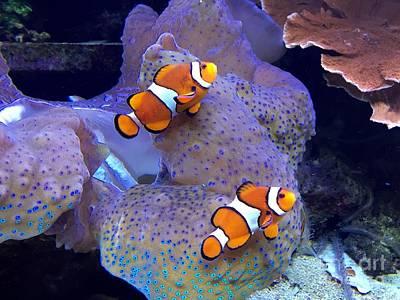 Smithsonian Museum Wall Art - Photograph - Clown Fish by Bri Lou