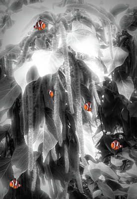 Photograph - Clown Fish Fantasy by Rosalie Scanlon