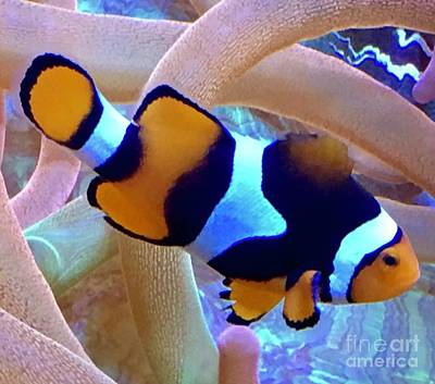 Photograph - Clown Fish  by Susan Garren