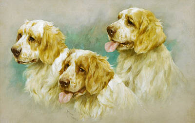 Clumber Spaniels Art Print by Arthur Wardle