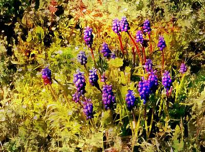 Photograph - Clump Of Blue Grape Hyacinth by Dorothy Berry-Lound
