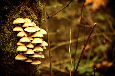Photograph - Cluster O Shrooms by Monte Arnold