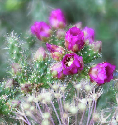 Photograph - Cluster Of Bright Pink Cholla Cactus Flowers And Buds by Barbara Rogers Nature Inspired Art Photography