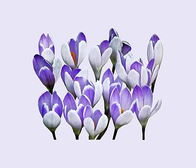 Spring Photograph - Cluster Of Crocuses by Susan Savad