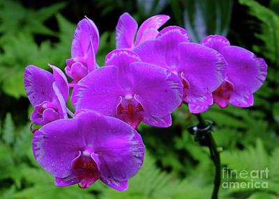 Photograph - Cluster Of Orchids by Mini Arora