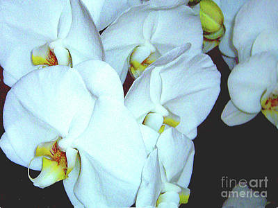 Photograph - Cluster Of Pale Blue Orchids by Merton Allen