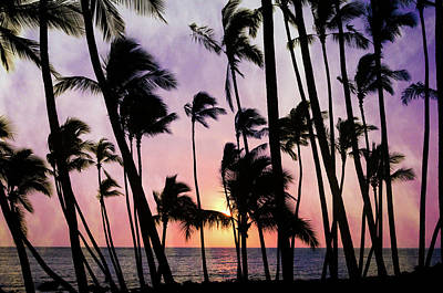 Photograph - Cluster Of Palms by Don Schwartz