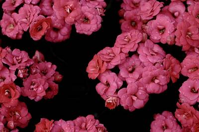 Photograph - Clusters Of Pink by Tim Good