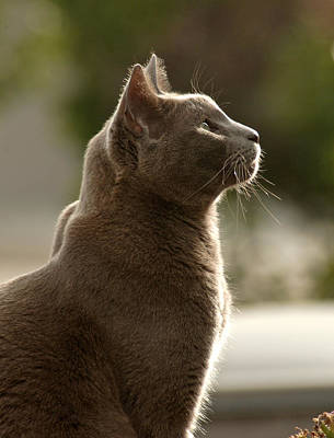 Print Cat Photograph - Clydes Profile by James Steele