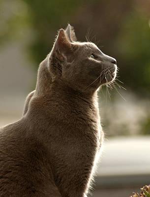 Prints Cat Photograph - Clydes Profile by James Steele